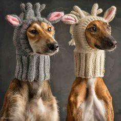 Elegance in Winter !!!