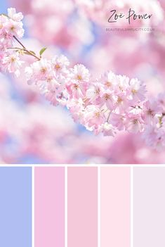 This pastel pink Colour Palette was inspired by the most beautiful Cherry Blossom tree Spring time is so pretty Available to buy as a print in a range of formats as well as greeting cards postcards notebooks stickers tote bags coasters and Color Schemes Colour Palettes, Spring Color Palette, Pastel Colour Palette, Room Color Schemes, Colour Pallette, Color Palate, Spring Colors, Pastel Colors, Color Combos