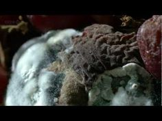 After Life: The Science Of Decay (BBC Documentary)  //  why decay matters. amazing timelapse.