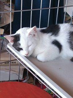 ルリ子は寝てばかりだ。on Twitpic