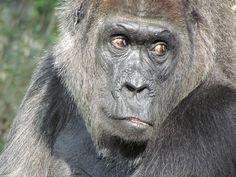 49234 Und dann ist der Zoo by golli43, via Flickr