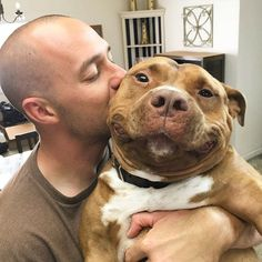 Meatball (Meaty for short) is a pit bull mix that has stolen nearly 40k hearts…