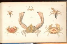 Herbst Crabs & Lobsters Plate LX