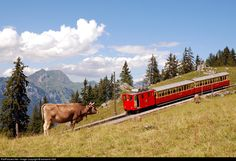 1914 Built rack loco He 2/2 No. 13 climbs away from Breitlauenen on its way to Schynige Platte in the Bernese Oberland