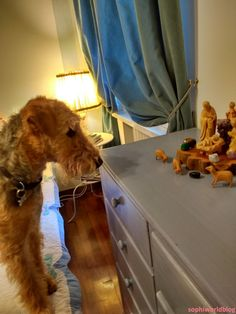Airedale and the Crib! Read more on www.sophiworldblog.com