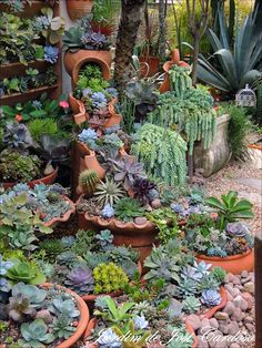 succulents beautifully combined to form a lush garden., Containers of succulents beautifully combined to form a lush garden., Containers of succulents beautifully combined to form a lush garden. Small Front Yard Landscaping, Succulent Landscaping, Succulent Gardening, Cacti And Succulents, Planting Succulents, Backyard Landscaping, Container Gardening, Garden Plants, Landscaping Ideas