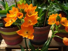 Burst of orange for summer. come and pick one of these beauties for a friend or yourself!