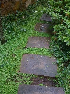 patio ground cover