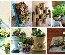 diy-plantas-em-casa-ideias