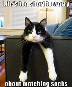 I Am Cat - 14th September 2015