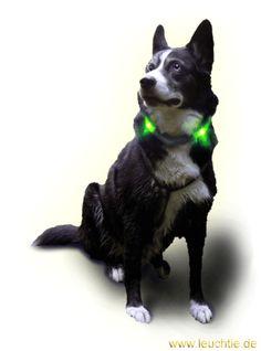 Leuchthalsband LEUCHTIE Plus für Hunde // LEUCHTIE Plus light collar for dogs