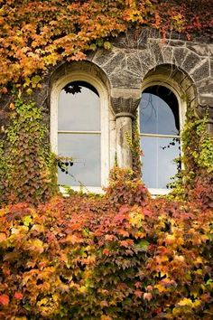 Provence in Autumn.....must do this with my balcony.  Simply lovely.