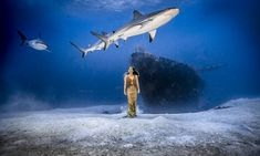 Model stars in underwater fashion shoot with sharks