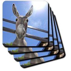 Kike Calvo Animals - Donkey in a farm - Coasters