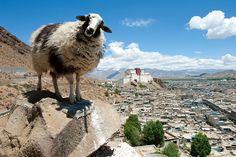 Tibet Travel Tips for Avoiding Altitude Sickness