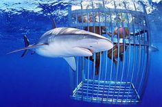 Shark tour North shore
