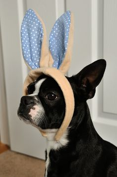 Easter Boston: Leia is gonna get me for this later...