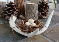 bird nest in antler