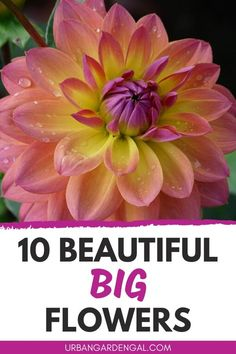 Big flowers like dahlias, camellias and sunflowers really stand out in the garden. Here are 10 beautiful large flowers to plant in your garden. #flowers #flowergarden Flower Gardening, Gardening Tips, Planting Flowers, Annual Flowers, Large Flowers, Flowering Plants, Flowers Perennials, Dahlias, Garden Beds