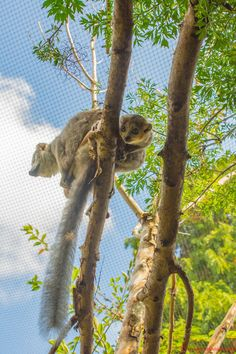 https://flic.kr/p/yDV9DD | 20150919-_DSC9716 | Bristol Zoo