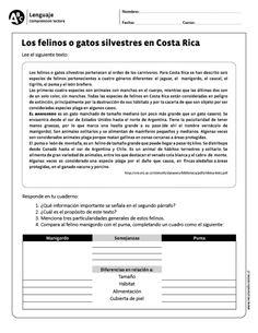 """Los felinos o gatos silvestres en Costa Rica"""""""