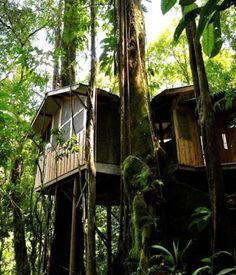 Blog - Casa na árvore: de sonho à realidade! Conheça a comunidade que vive nessas gracinhas...