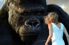 This legendary gorilla has been capturing the public's imagination since the original black and white film, King Kong.