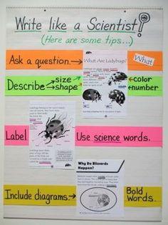 5th-grade-anchor-charts-scientist