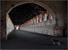 We meet in Pavia