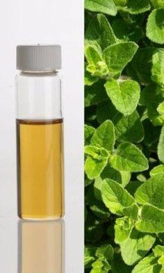 Oregano Oil: A Cure All Medicinal Alternative