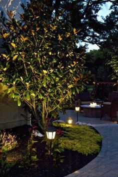Landscape lighting not only brings to life this Magnolia tree at night but provides safety and security as well.
