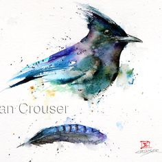 STELLER'S JAY & FEATHER Watercolor Print by Dean by DeanCrouserArt, $25.00