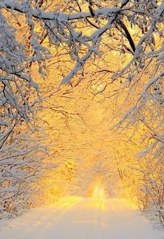 A glorious road in winter...