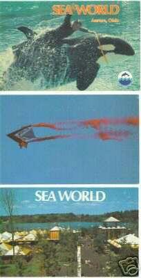 83 best sea world aurora ohio images on pinterest sea world sea world ohio brochure gumiabroncs Choice Image