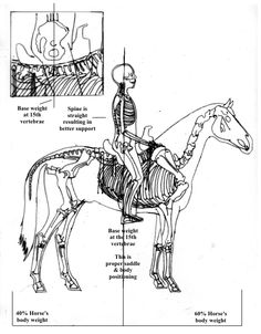 Perfect!   You cannot ride balanced by sitting on your crotch!  Great illustration!