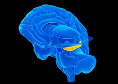 hipocampo1