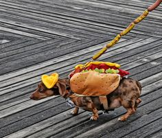 A real and live hot dog