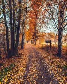 """🇫🇮 November walk in the woods (Finland) by Carlos """"Grury"""" Santos / 🍂cr. Autumn Scenes, All Nature, Autumn Nature, Autumn Leaves, Autumn Aesthetic, Autumn Cozy, Autumn Photography, Fall Pictures, Autumn Inspiration"""