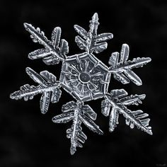 Snowflake-a-Day #42 by Don Komarechka - Photo 95420195 - 500px