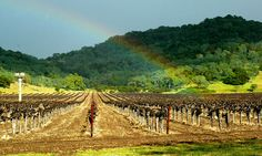 Napa Valley and the Vineyards - Which are Best Places to Visit in California?