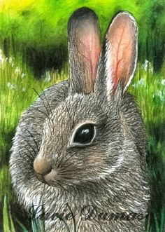 ACEO art print Hare 13 rabbit bunny, painting by Lucie Dumas