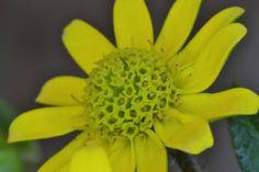 Shine like the sun   #Flower  #Petals  #Stamen  #Yellow  #Sun  #Summer  #Nature  #Closeup  #Macro  #Photographer  #Photography
