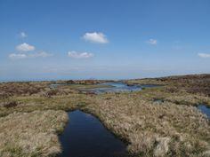 Dunkle Sumpflöcher auf dem Wicklow Way