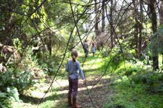 walk through the rainforest. Finding Joy