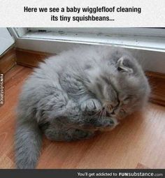 36 Absolutely Adorable And Funny Animals