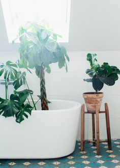 green plants in the bathroom interior krickelin