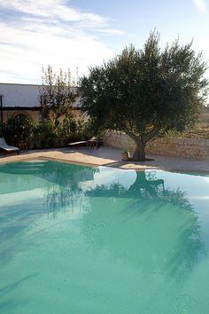 Cor da piscina e oliveira