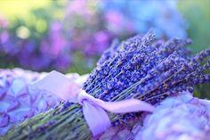 Ove biljke se koriste kao antistres terapija