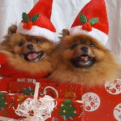 Always keep your pet Delighted & Healthy Win a $1000 Gift Card - 100% free Pet Meals for one year!   Check the LINK  http://DogsDogsBaby.us/GiftCard