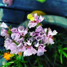 #eco #organic #nature #ecofriendly #green #bio #natural #sustainable #design #recycle #beauty #art #sustainability #healthy #style #instagood #eko #ecofashion #garden #environment